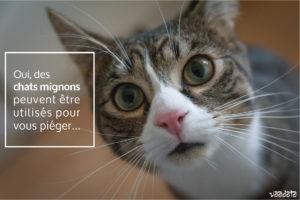 Photos d'un chat